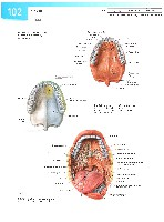 Sobotta Atlas of Human Anatomy  Head,Neck,Upper Limb Volume1 2006, page 109