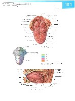 Sobotta Atlas of Human Anatomy  Head,Neck,Upper Limb Volume1 2006, page 110