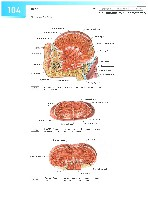 Sobotta Atlas of Human Anatomy  Head,Neck,Upper Limb Volume1 2006, page 111