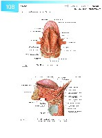 Sobotta Atlas of Human Anatomy  Head,Neck,Upper Limb Volume1 2006, page 115