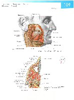 Sobotta Atlas of Human Anatomy  Head,Neck,Upper Limb Volume1 2006, page 116