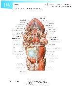 Sobotta Atlas of Human Anatomy  Head,Neck,Upper Limb Volume1 2006, page 121