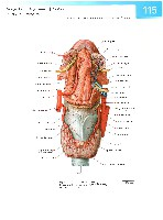 Sobotta Atlas of Human Anatomy  Head,Neck,Upper Limb Volume1 2006, page 122