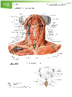 Sobotta Atlas of Human Anatomy  Head,Neck,Upper Limb Volume1 2006, page 125