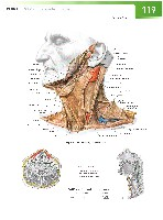 Sobotta Atlas of Human Anatomy  Head,Neck,Upper Limb Volume1 2006, page 126