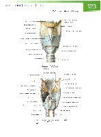 Sobotta Atlas of Human Anatomy  Head,Neck,Upper Limb Volume1 2006, page 130