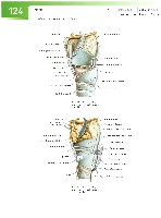 Sobotta Atlas of Human Anatomy  Head,Neck,Upper Limb Volume1 2006, page 131