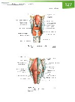 Sobotta Atlas of Human Anatomy  Head,Neck,Upper Limb Volume1 2006, page 134