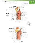 Sobotta Atlas of Human Anatomy  Head,Neck,Upper Limb Volume1 2006, page 136