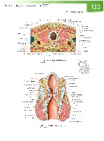 Sobotta Atlas of Human Anatomy  Head,Neck,Upper Limb Volume1 2006, page 140