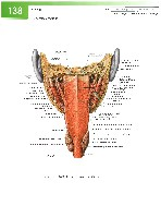 Sobotta Atlas of Human Anatomy  Head,Neck,Upper Limb Volume1 2006, page 145