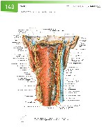 Sobotta Atlas of Human Anatomy  Head,Neck,Upper Limb Volume1 2006, page 147