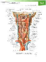 Sobotta Atlas of Human Anatomy  Head,Neck,Upper Limb Volume1 2006, page 148