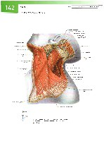 Sobotta Atlas of Human Anatomy  Head,Neck,Upper Limb Volume1 2006, page 149