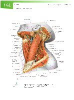 Sobotta Atlas of Human Anatomy  Head,Neck,Upper Limb Volume1 2006, page 151