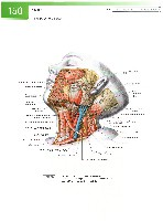 Sobotta Atlas of Human Anatomy  Head,Neck,Upper Limb Volume1 2006, page 157