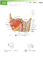 Sobotta Atlas of Human Anatomy  Head,Neck,Upper Limb Volume1 2006, page 163