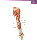 Sobotta Atlas of Human Anatomy  Head,Neck,Upper Limb Volume1 2006, page 188