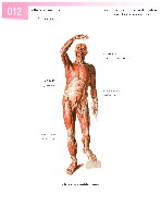 Sobotta Atlas of Human Anatomy  Head,Neck,Upper Limb Volume1 2006, page 19