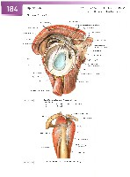 Sobotta Atlas of Human Anatomy  Head,Neck,Upper Limb Volume1 2006, page 191