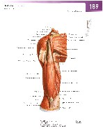 Sobotta Atlas of Human Anatomy  Head,Neck,Upper Limb Volume1 2006, page 196