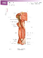Sobotta Atlas of Human Anatomy  Head,Neck,Upper Limb Volume1 2006, page 197