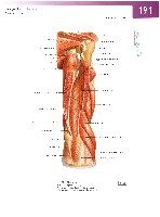 Sobotta Atlas of Human Anatomy  Head,Neck,Upper Limb Volume1 2006, page 198