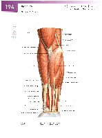 Sobotta Atlas of Human Anatomy  Head,Neck,Upper Limb Volume1 2006, page 201