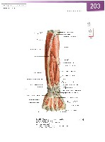 Sobotta Atlas of Human Anatomy  Head,Neck,Upper Limb Volume1 2006, page 210