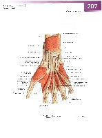 Sobotta Atlas of Human Anatomy  Head,Neck,Upper Limb Volume1 2006, page 214