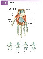 Sobotta Atlas of Human Anatomy  Head,Neck,Upper Limb Volume1 2006, page 215