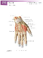 Sobotta Atlas of Human Anatomy  Head,Neck,Upper Limb Volume1 2006, page 217
