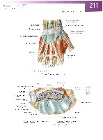 Sobotta Atlas of Human Anatomy  Head,Neck,Upper Limb Volume1 2006, page 218