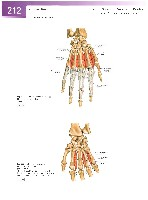 Sobotta Atlas of Human Anatomy  Head,Neck,Upper Limb Volume1 2006, page 219