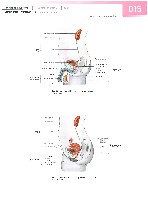 Sobotta Atlas of Human Anatomy  Head,Neck,Upper Limb Volume1 2006, page 22