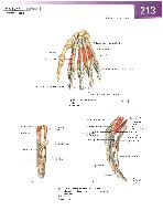 Sobotta Atlas of Human Anatomy  Head,Neck,Upper Limb Volume1 2006, page 220