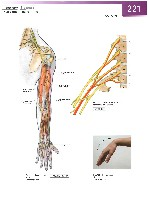 Sobotta Atlas of Human Anatomy  Head,Neck,Upper Limb Volume1 2006, page 228