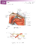 Sobotta Atlas of Human Anatomy  Head,Neck,Upper Limb Volume1 2006, page 233