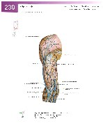 Sobotta Atlas of Human Anatomy  Head,Neck,Upper Limb Volume1 2006, page 237