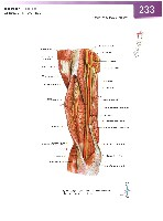 Sobotta Atlas of Human Anatomy  Head,Neck,Upper Limb Volume1 2006, page 240