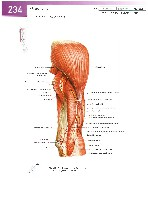 Sobotta Atlas of Human Anatomy  Head,Neck,Upper Limb Volume1 2006, page 241