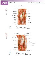 Sobotta Atlas of Human Anatomy  Head,Neck,Upper Limb Volume1 2006, page 247