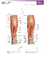 Sobotta Atlas of Human Anatomy  Head,Neck,Upper Limb Volume1 2006, page 248