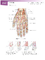 Sobotta Atlas of Human Anatomy  Head,Neck,Upper Limb Volume1 2006, page 249
