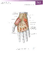 Sobotta Atlas of Human Anatomy  Head,Neck,Upper Limb Volume1 2006, page 250