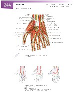 Sobotta Atlas of Human Anatomy  Head,Neck,Upper Limb Volume1 2006, page 251