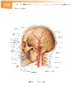 Sobotta Atlas of Human Anatomy  Head,Neck,Upper Limb Volume1 2006, page 265