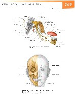Sobotta Atlas of Human Anatomy  Head,Neck,Upper Limb Volume1 2006, page 276
