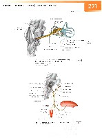 Sobotta Atlas of Human Anatomy  Head,Neck,Upper Limb Volume1 2006, page 278