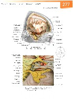 Sobotta Atlas of Human Anatomy  Head,Neck,Upper Limb Volume1 2006, page 284
